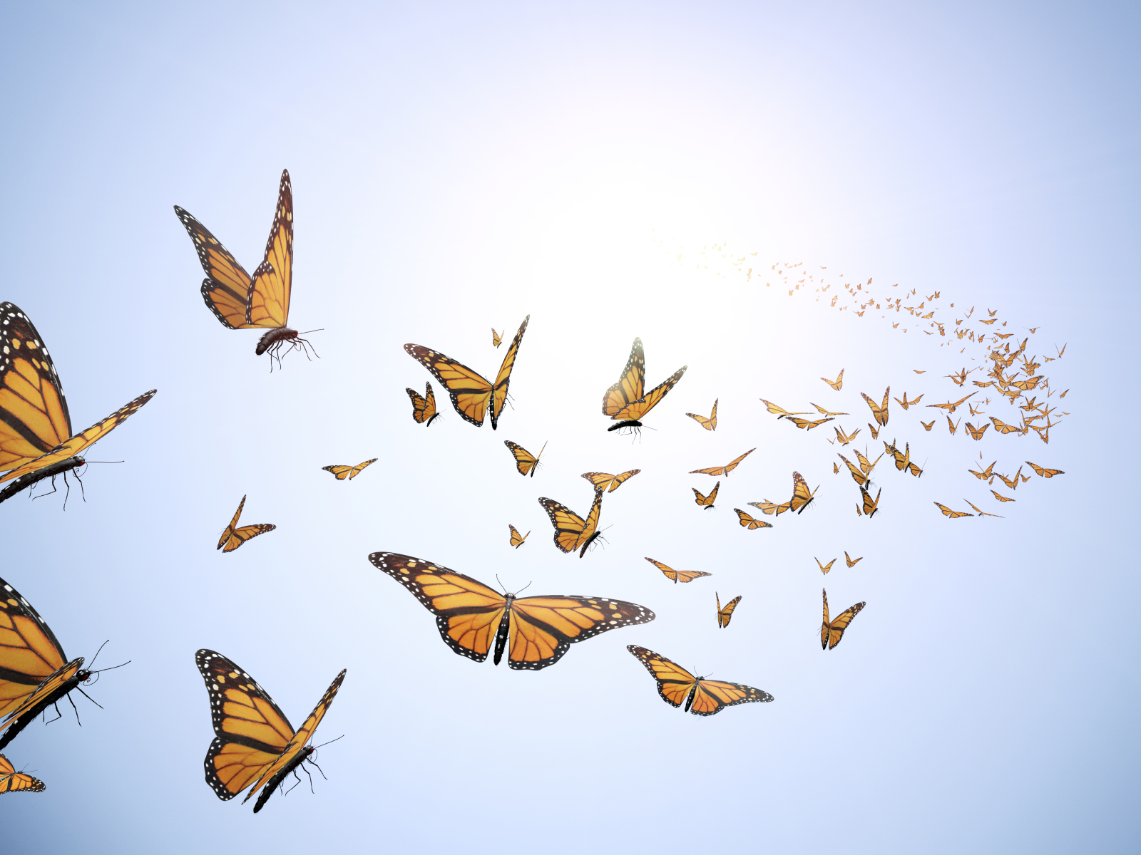 butterflies for Ependymoma day